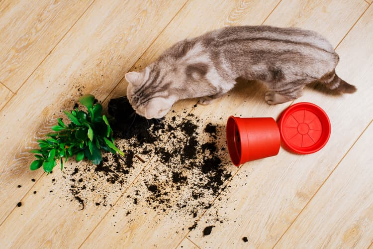Top Cat Poisons Plants Medications Insecticides And More