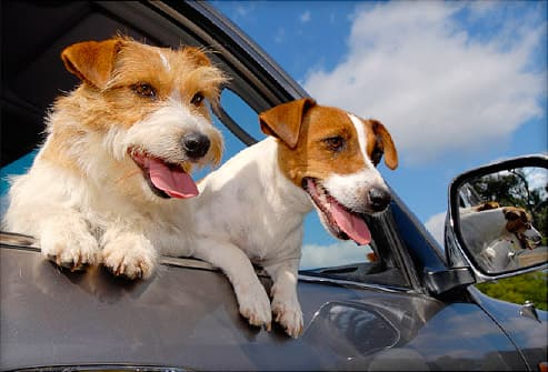 Dog Car Sickness and Motion Sickness: Causes and Treatment