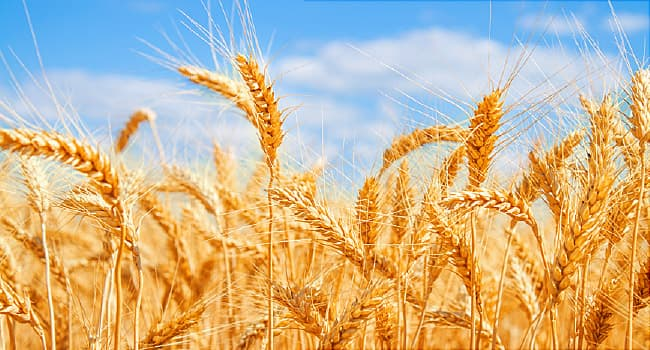 Food and Recipe Substitutes for Your Wheat Allergy