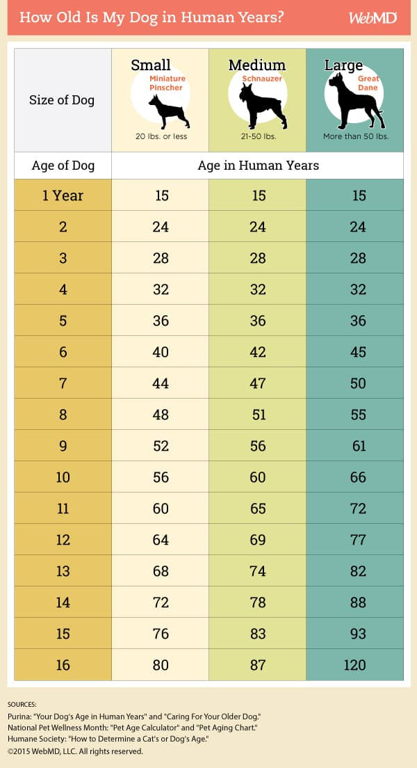 Dog Age Chart How To Convert Your Dogs Age Into Human Years