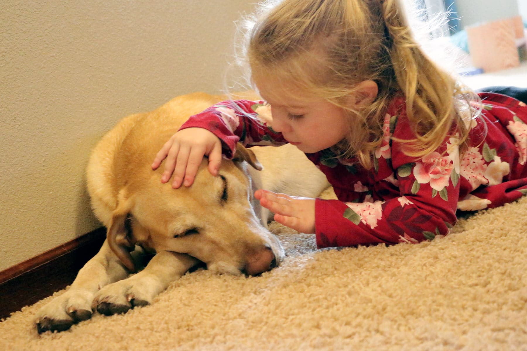 photo of toddler girl petting sleeping pet dog
