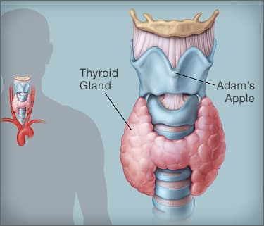 hashimoto's thyroiditis: symptoms, causes, and treatments, Human Body