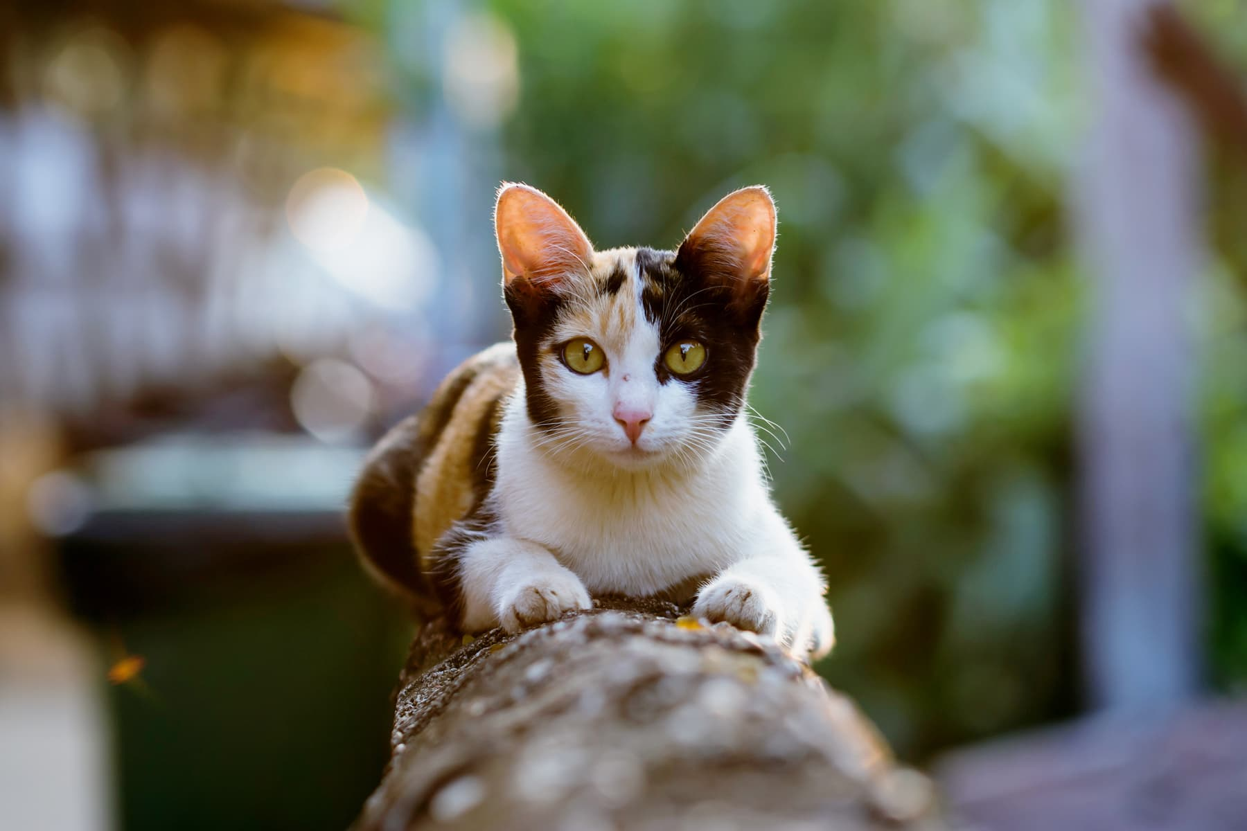 How To Keep Outdoor Cats Safe And Healthy