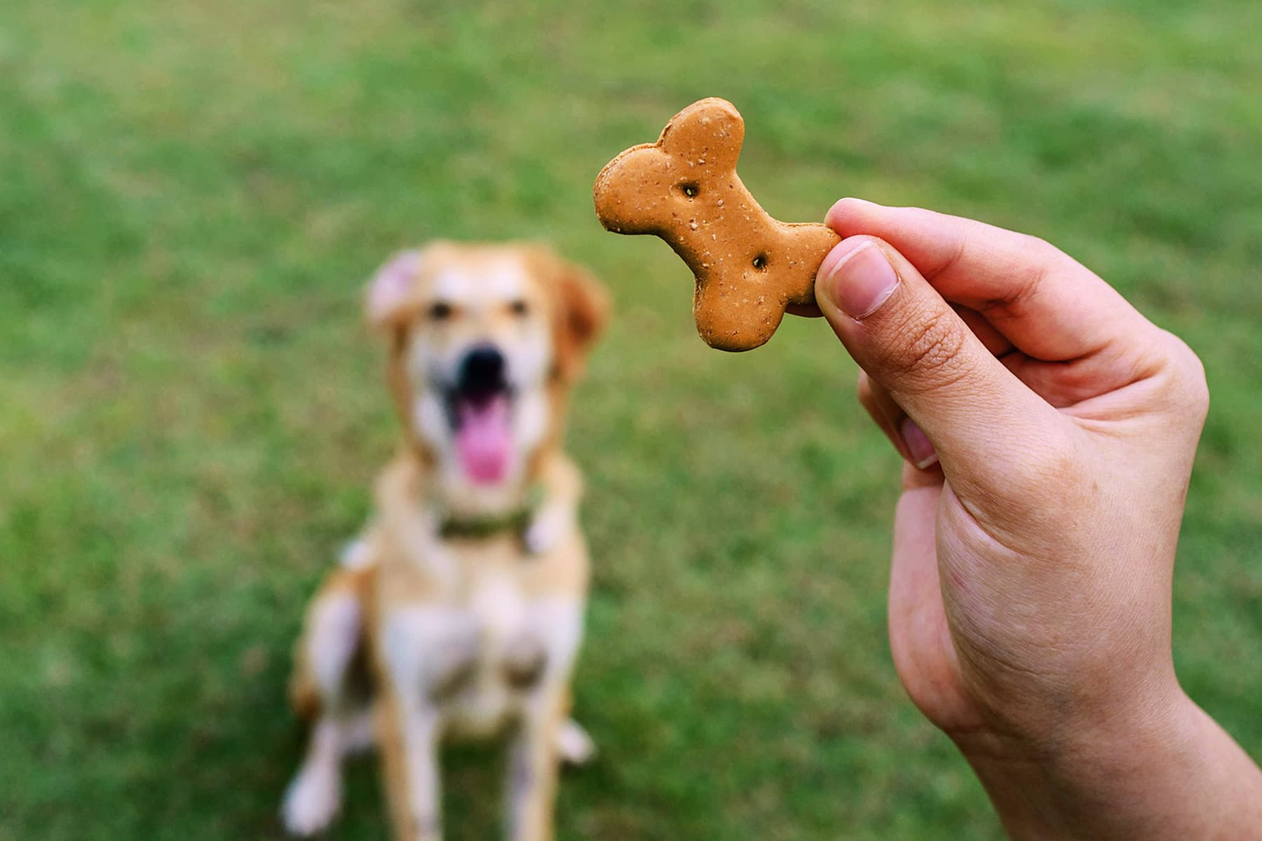 How Many Pet Treats for Cats and Dogs?