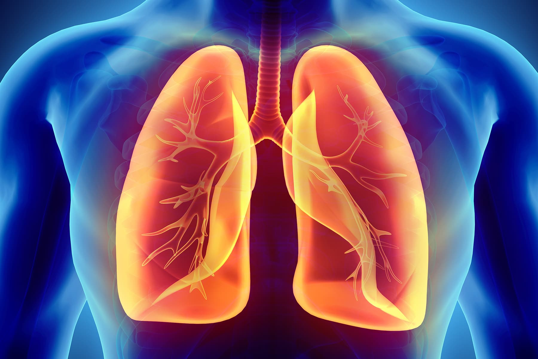 photo illustration of lungs