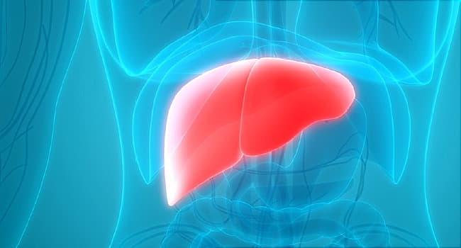 illustration of liver