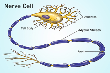 nerve cell illustration