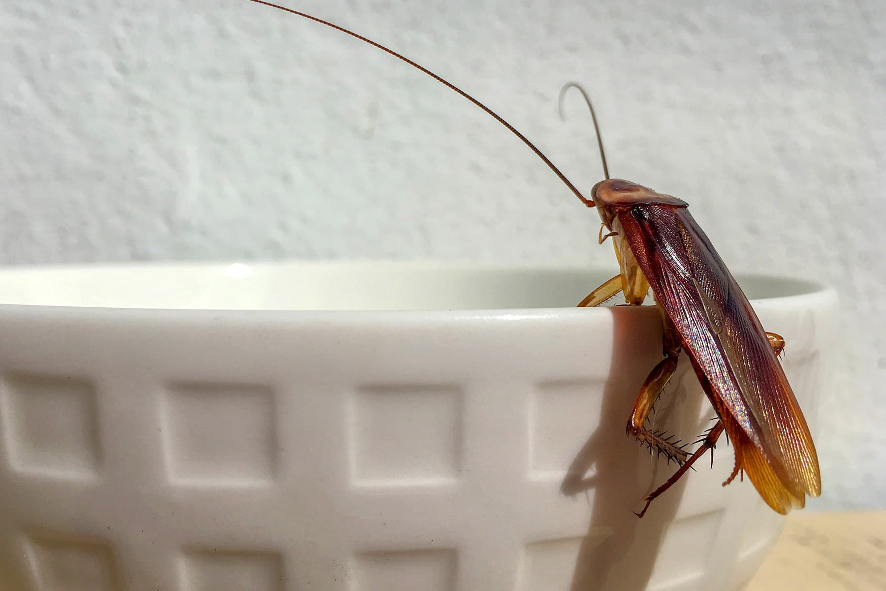 Bugs In Your Pantry And How To Get Rid Of Them