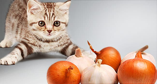 Harmful Foods Your Cat Should Never Eat Tuna Milk Raw Fish And More