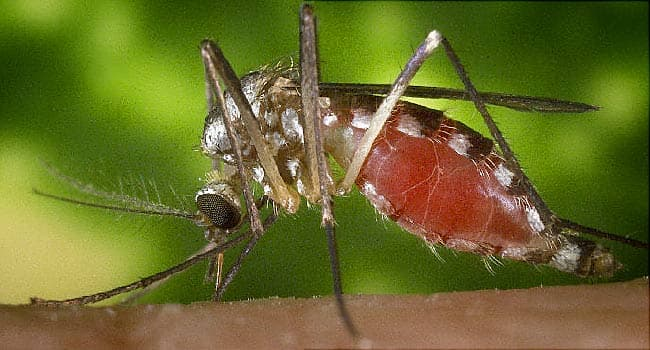 Diseases Spread By Mosquitoes-9376