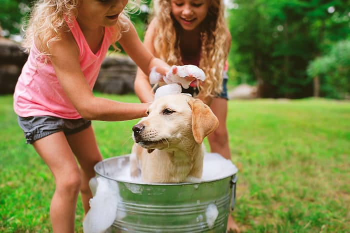 photo of dog being washed