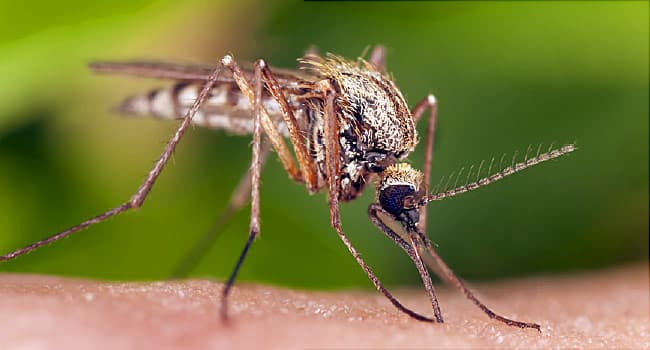 Summer of Mosquito Swarms a Possibility This Year