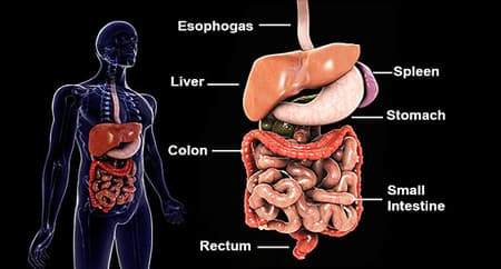 Ulcerative Colitis Pictures Warning Signs Of Uc How It S Different From Crohn S And More