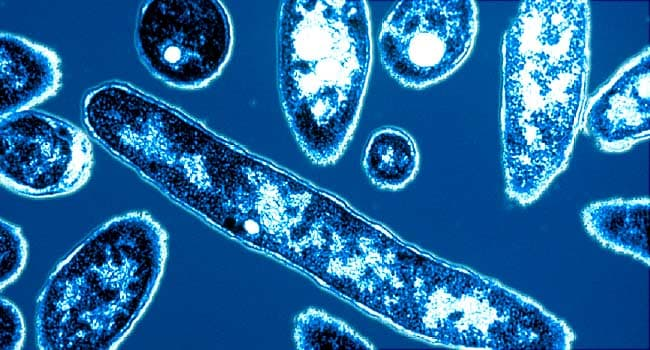 FAQ: What To Know About Dangerous Vibrio Bacteria