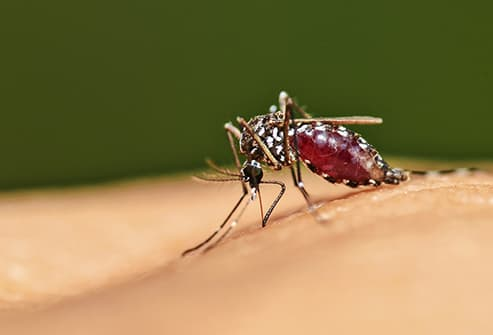 mosquito on skin close up