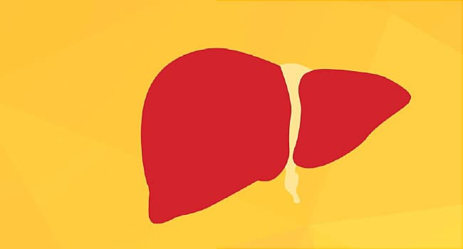 What Does Your Liver Do?