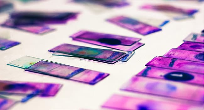 slides with violet ink