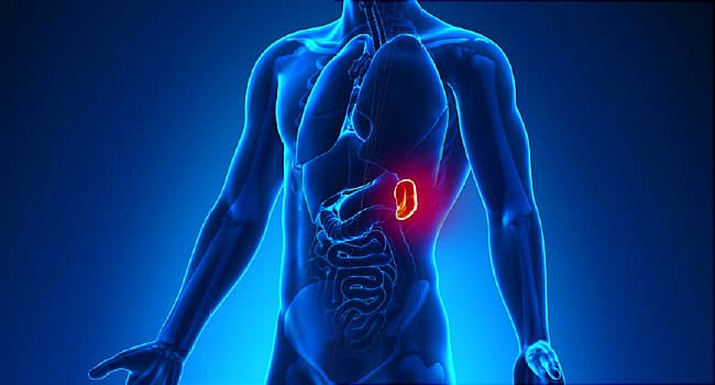 5 Super-Cool Things About Your Spleen