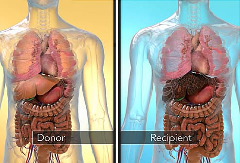 When One Person Donates Part Of Their Liver To Someone Else