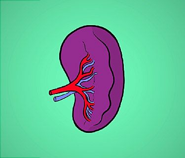 spleen video: what does this organ do?, Cephalic Vein