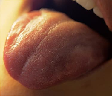 Tongue And Taste Buds Video How You Taste Flavors In Your Food
