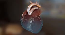 photo of heart
