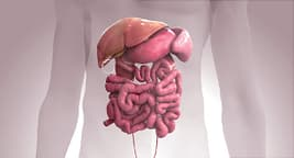 intestine animation