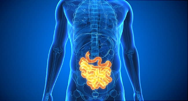 Video: Unravel 5 Facts About Your Intestines
