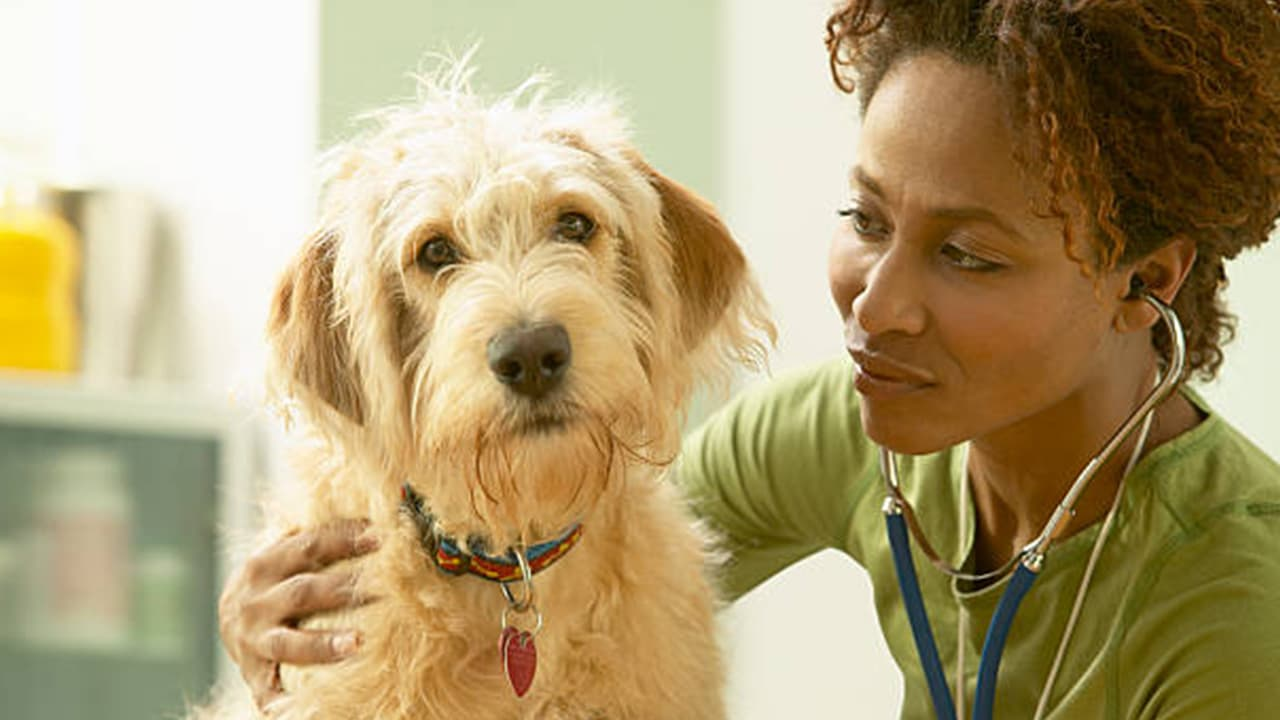 Deworming Dogs And Puppies Dewormers And Other Medications