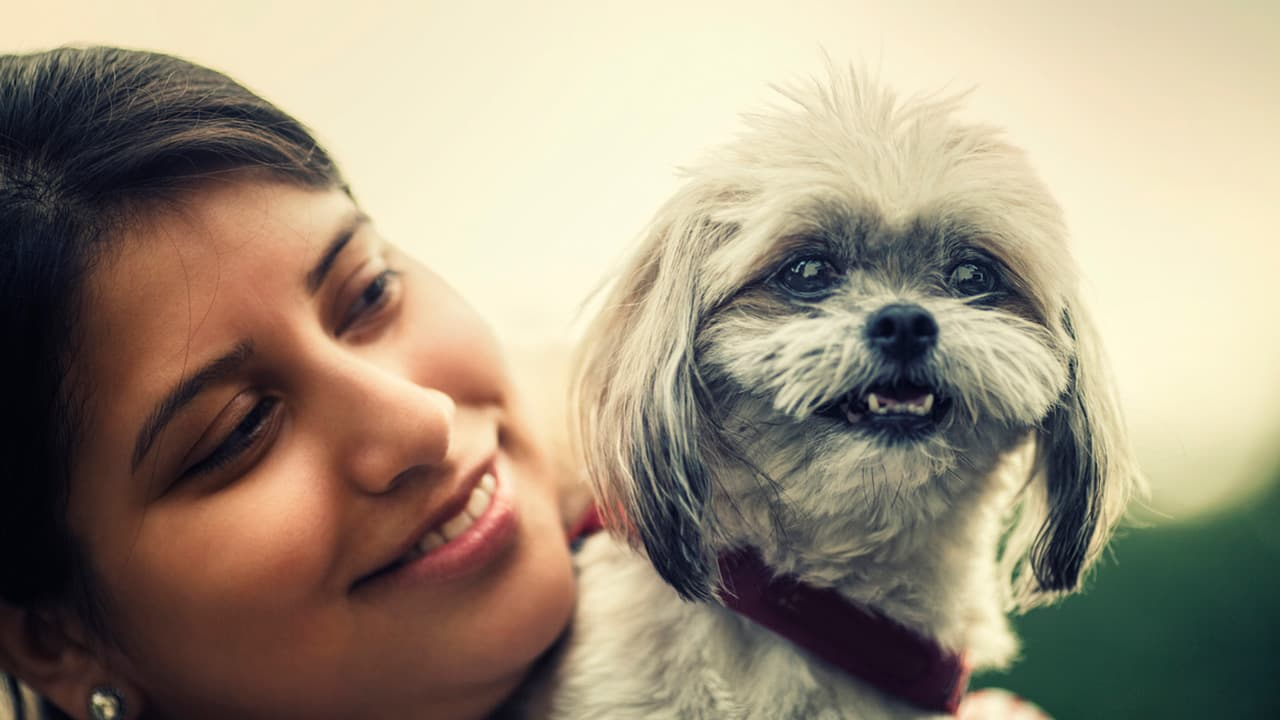 Dog age chart how to convert your dogs age into human years nvjuhfo Image collections