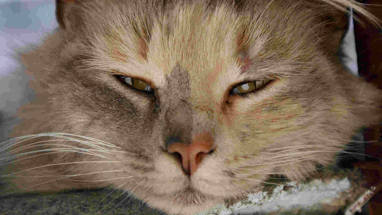 Sneezing And Watering Eyes In Cats Natural Treatment