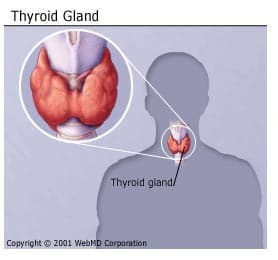 Thyroid Problems Disease Types Causes