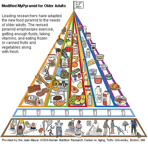 Think, Food pyramid for adult think