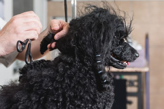photo of dog getting groomed