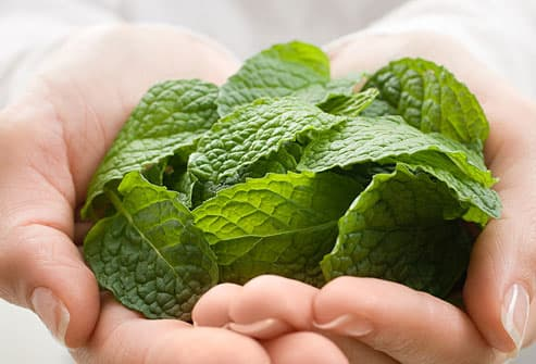 Woman Holding Mint Leaves