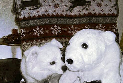 Little white dog with stuffed bear