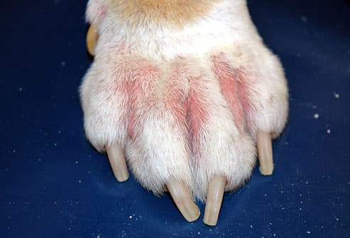 PetAirapy's unique systems can help your pet start to be free from the symptoms of Pet Atopic Dermatitis or Pet Atopy (photo courtesy of WebMD)