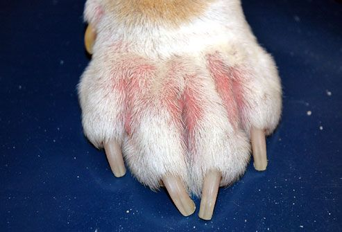 pictures of skin problems in dogs from dandruff to