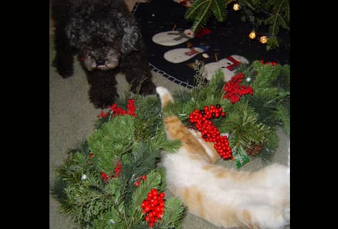 Cat and dog playing under tree