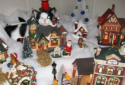 Cat in Christmas town display
