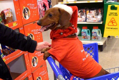 Daschund in shopping cart