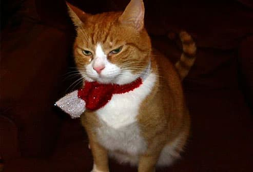 Orange cat with red bow