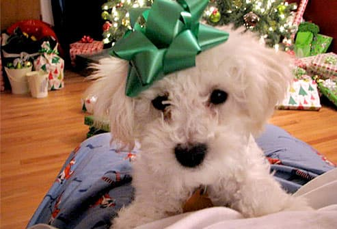 White dog with green bow on head