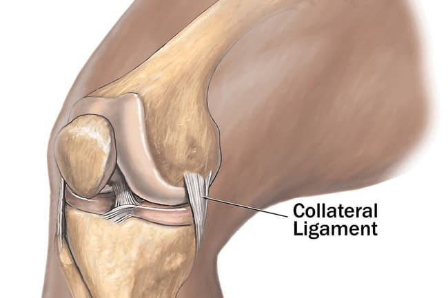collateral ligament