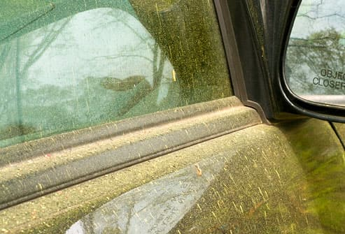 Car window covered in heavy tree pollen