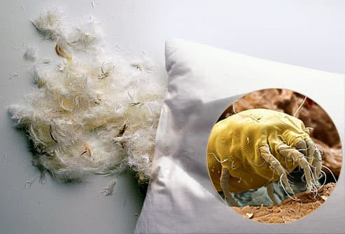 A pillow and white feathers