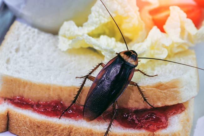 photo of cockroach