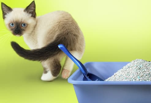 Best Food For Cats With Chronic Diarrhea
