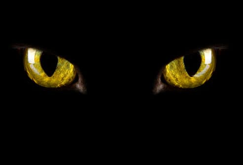 Glowing yellow cat eyes