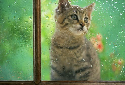 Kitten Through Rainy Window
